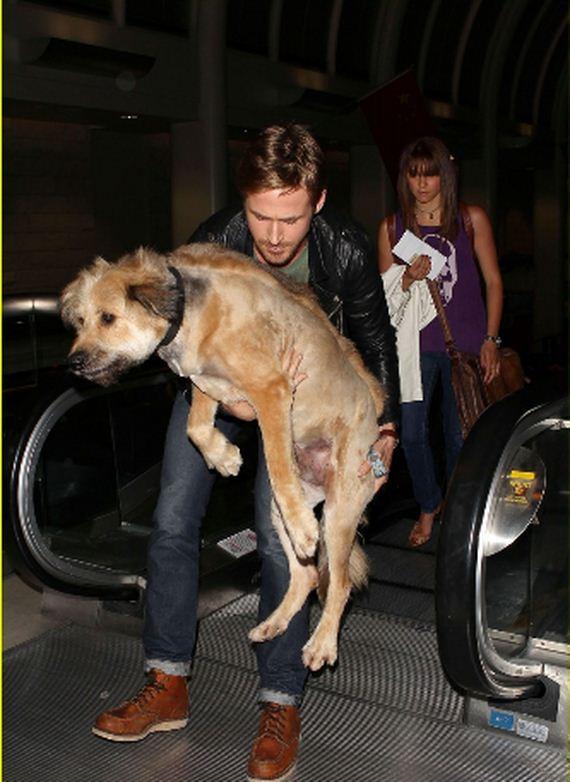 celebs-canine-pals