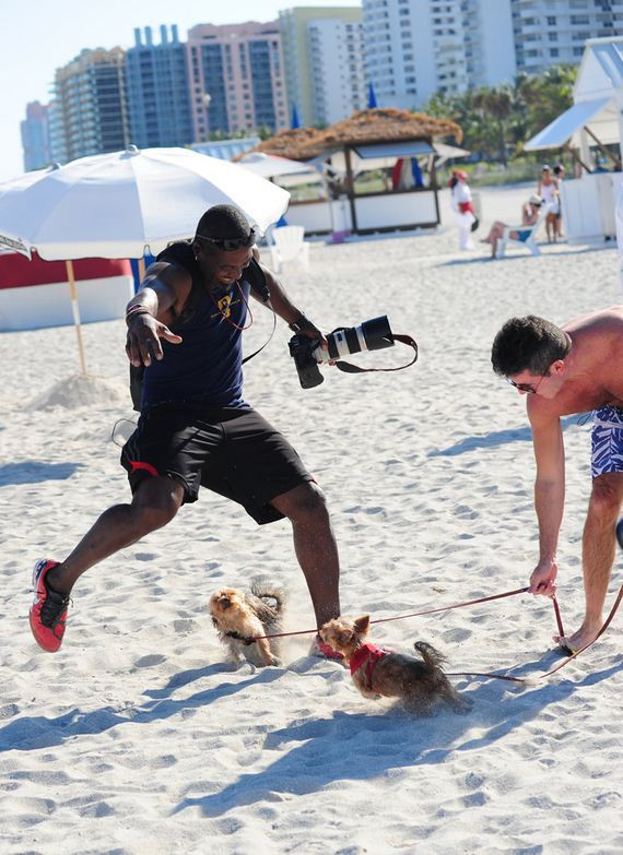 gallery_enlarged-simon-cowell-racist-dogs