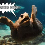 Turtles That Are Secretly Grumpy Old Men