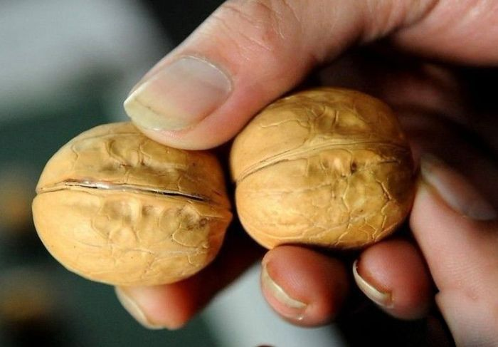 nuts_01