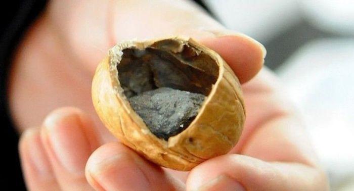 nuts_04