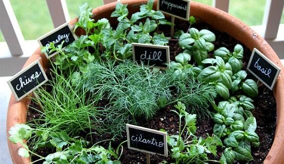 01-Herb-Gardens