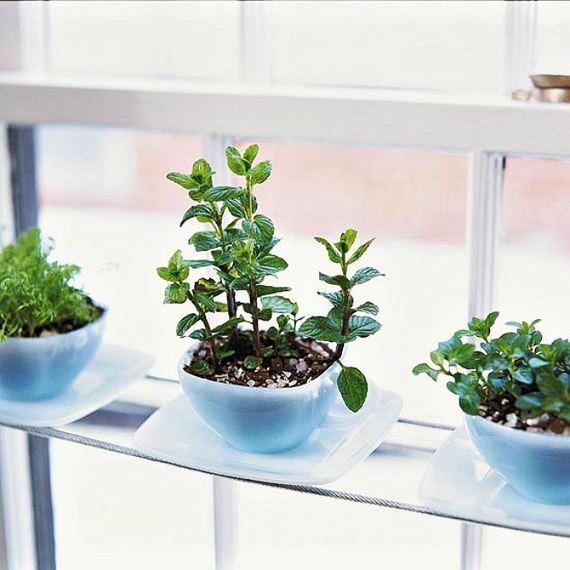 09-Herb-Gardens