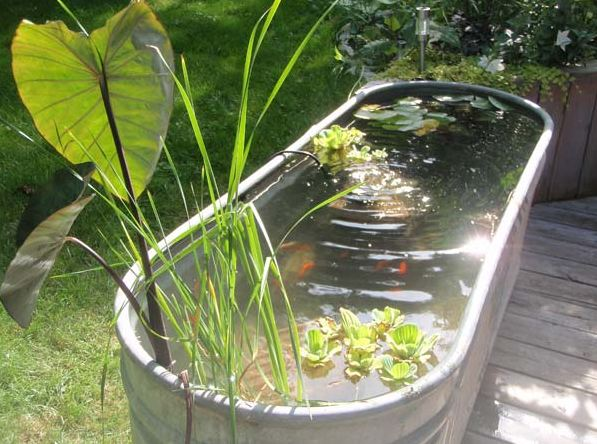 22 small garden or backyard aquarium ideas will blow your mind for Outdoor fish tank pond