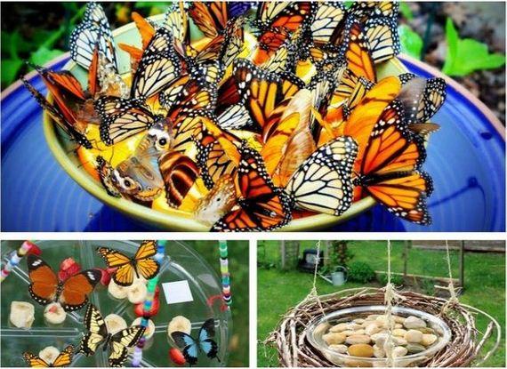 01-butterfly-feeder