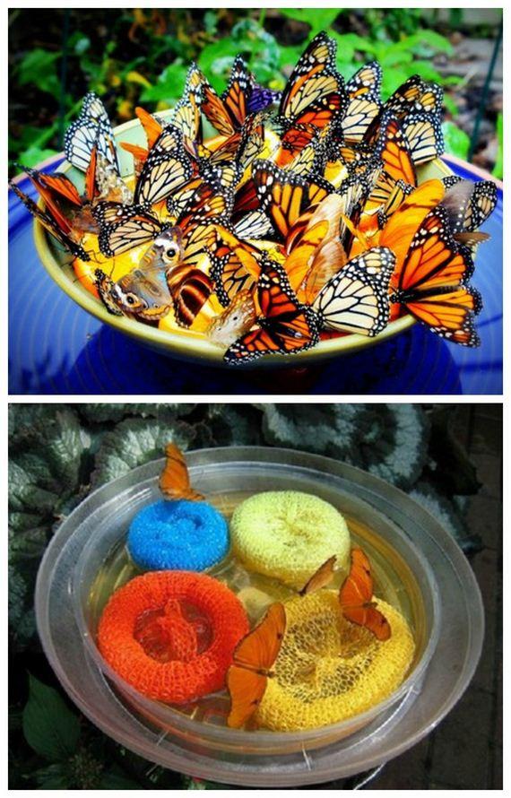 03-butterfly-feeder