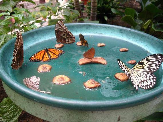 10-butterfly-feeder