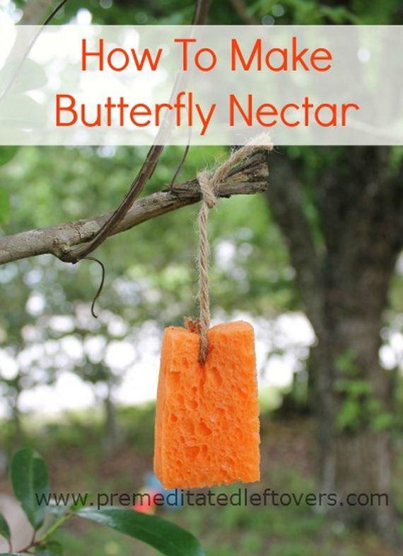 13-butterfly-feeder
