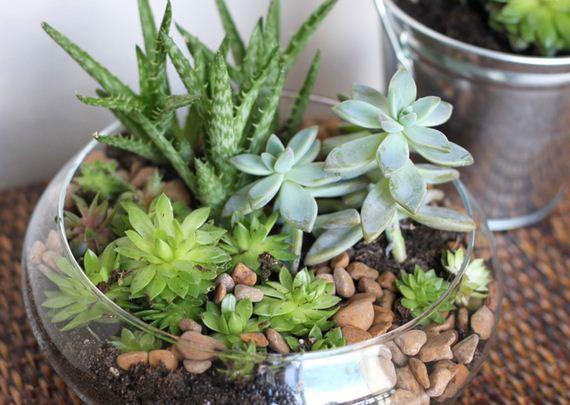 04-Indoor-Gardens